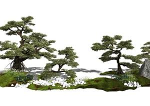 新中式景观植物景观树乔木松树石头SU(草图大师)模型