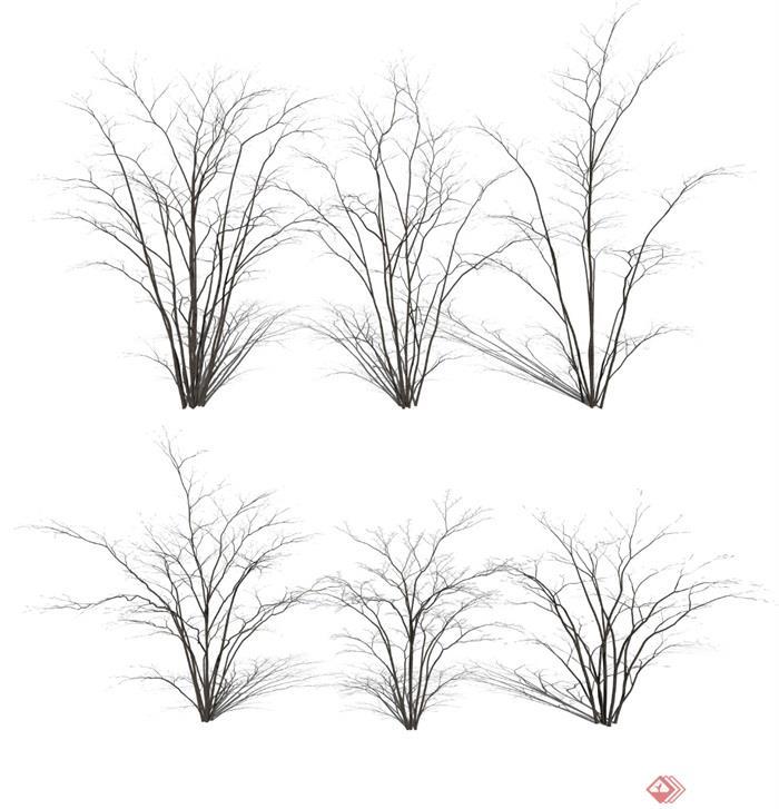现代植物景观树乔木枯枝枯树SU亿博网络平台
