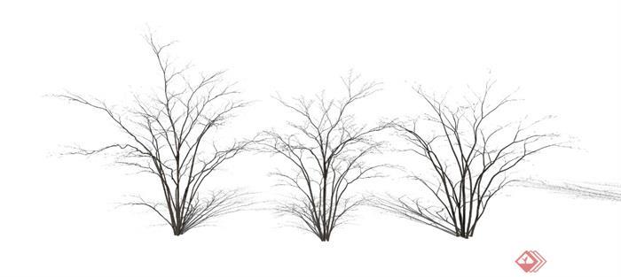现代植物景观树乔木枯枝枯树SU亿博网络平台1